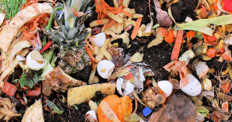 7 Ways To Save Food From Landfills